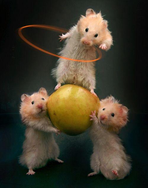 histoire drole avec un hamster