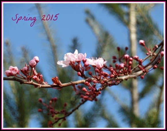 April's Homemaking: Signs of Spring and Organizing my DVDs