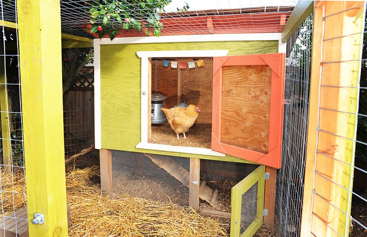 Raising Chickens in New York City: Laws, Tips and ...