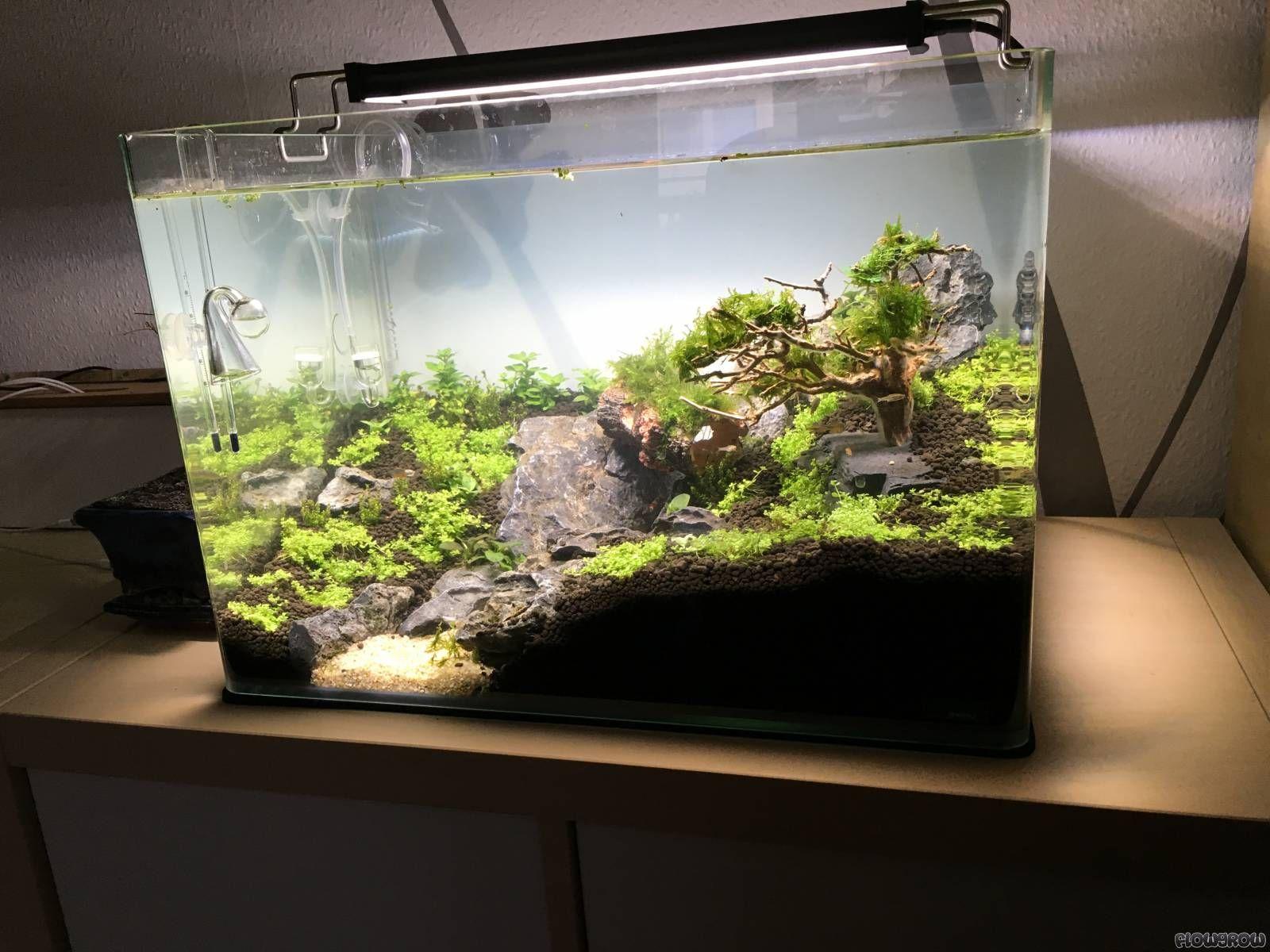 35b2fee0b63d1265ea58b6d97621764a Frais De Aquarium Amazonien Concept