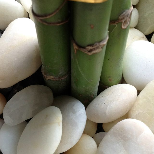 bamboo up close | bamboozled | Pinterest | Lucky bamboo, Feng shui on cool bathroom sink ideas, double vanity bathroom mirror ideas, spa bathroom garden tub, spa bathroom vanities ideas, spa bathroom trends, hgtv spa bathroom ideas, spa bathroom layout, spa bathroom mirrors, spa like bathroom ideas, shop modern rustic design ideas, spa feel in bathrooms, spalook bathroom ideas, tv design ideas, green bathroom ideas, spa bathroom stone brown, spa style bathroom design, conservatory design ideas, spa bathroom decor, earthy colors bedroom design ideas, spa bathroom lights,