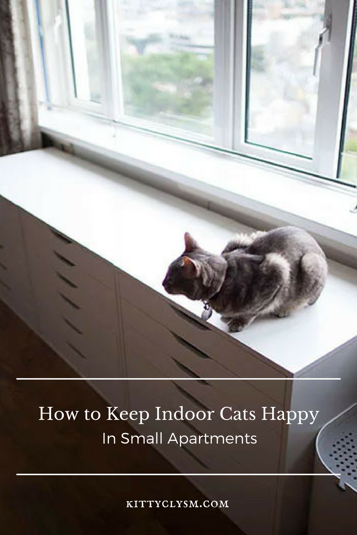 How To Keep Indoor Cats Happy In Small Apartments Indoor Cat Cat Furniture Diy Cat Care
