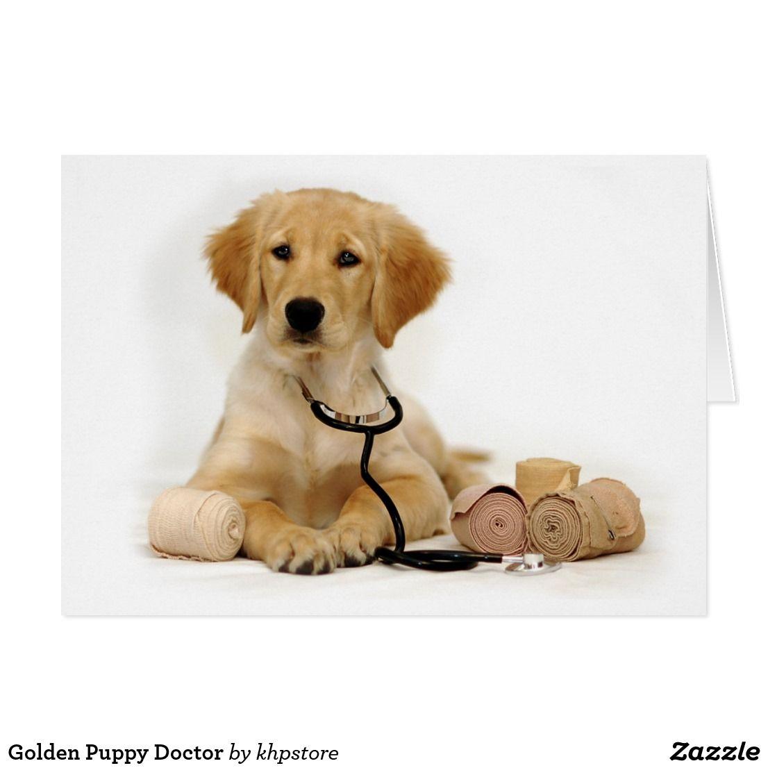 Golden Puppy Doctor Card Zazzle Com Golden Puppy Puppies