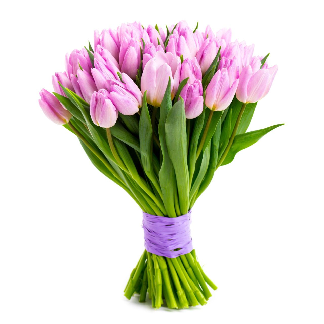 How To Care For Tulip Bulbs After Bloom To Keep Them Looking Beautiful Gardenerdy Tulip Bulbs Flower Care Indoor Flowers