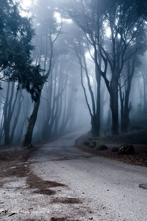 isis0isis: The last road Jorge Maia (via The last road by...