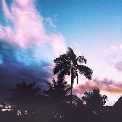 palm trees sunset tumblr. This Ain\u0027t A Shoulder With Chip Or An Ego Palm Trees Sunset Tumblr