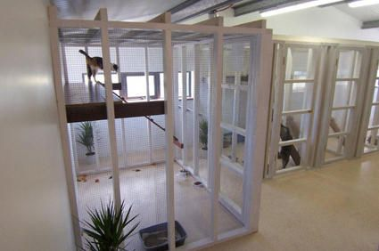Petsfirst Boarding Kennels And Cat Cages Cat Hotel Dog Rooms