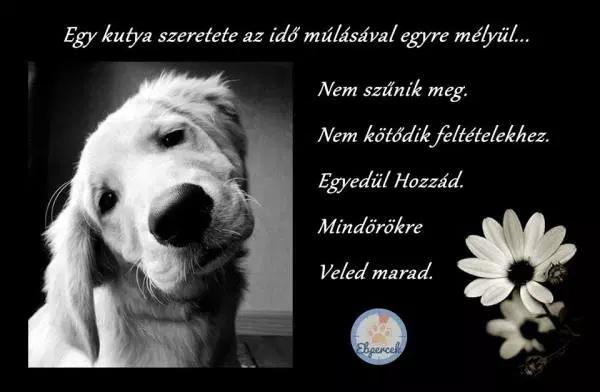 kutyaszeretet idézetek Kutyás idézetek – KutyaSzeretet.hu in 2020   Dog love, Dogs, Animals