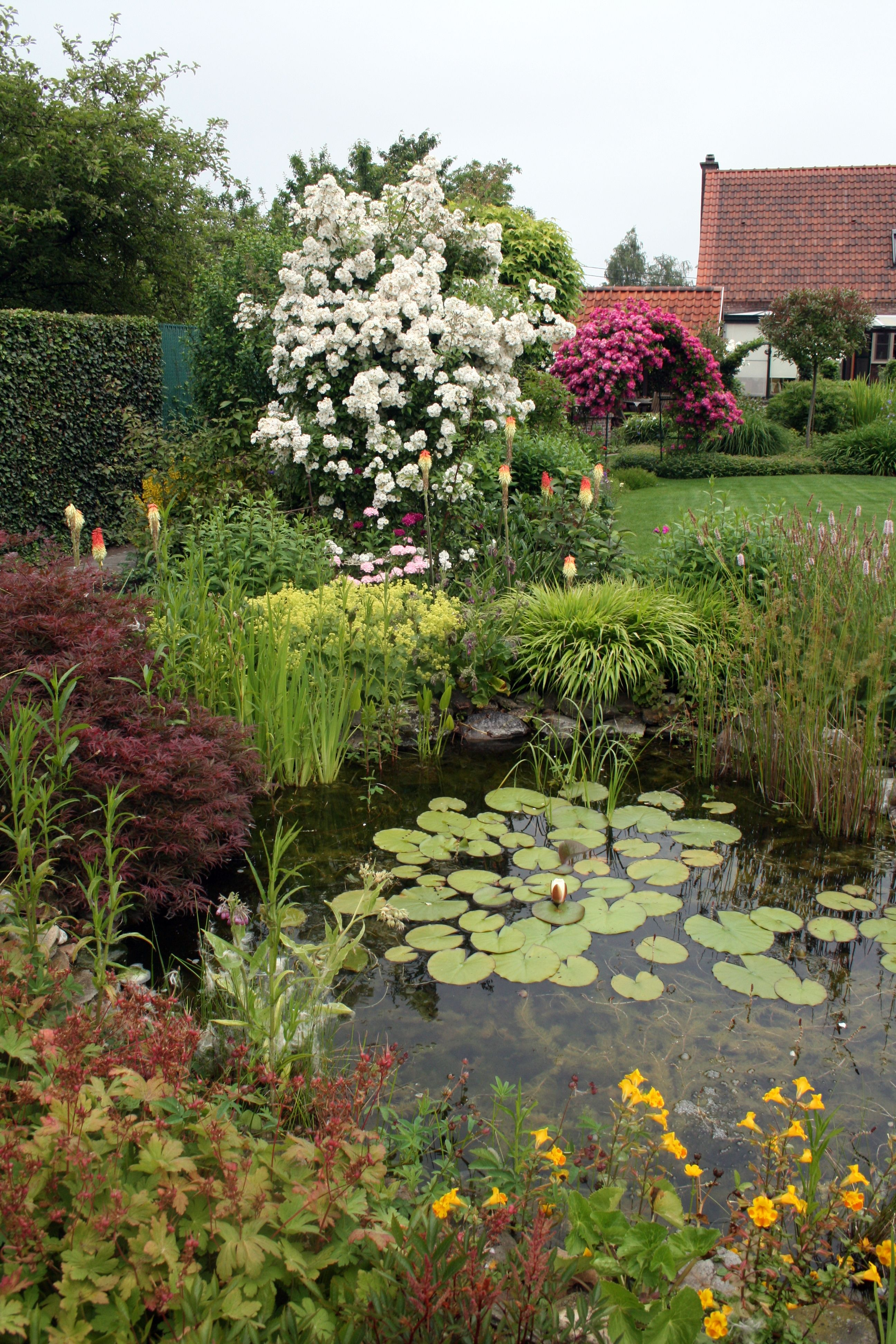 Pool Wasser Im Garten Bepflanzung Rose Graser Fackrllilie Gartenreise Belgien Holland Plants Outdoor Outdoor Decor