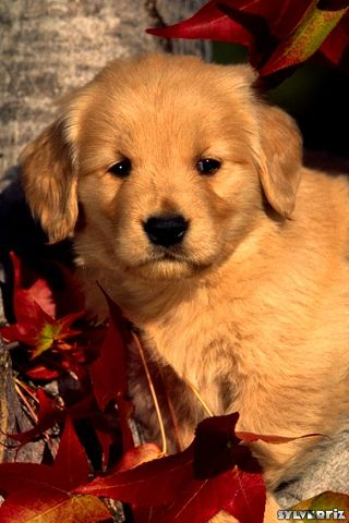 Live Wallpapers Of Cute Dogs Bestpicture1 Org