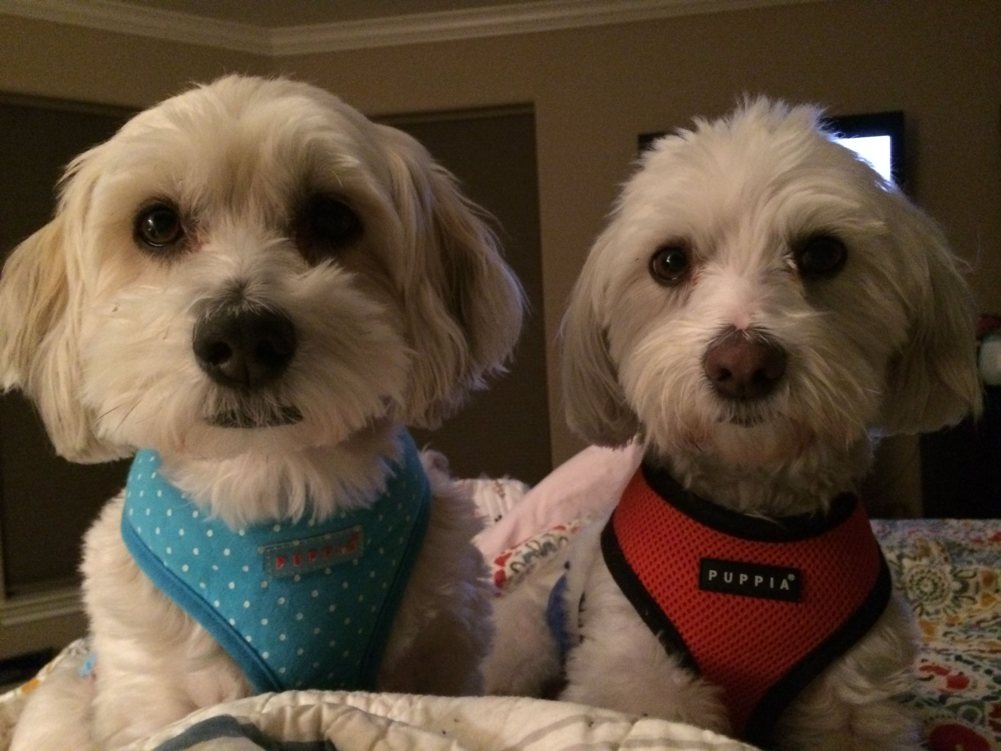 Tony & Rico in TX Bonded Brothers are Available for