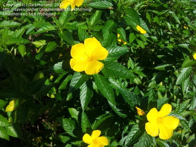Yellow Wildflower Identification Pxquvb2rq Gardening Pinterest