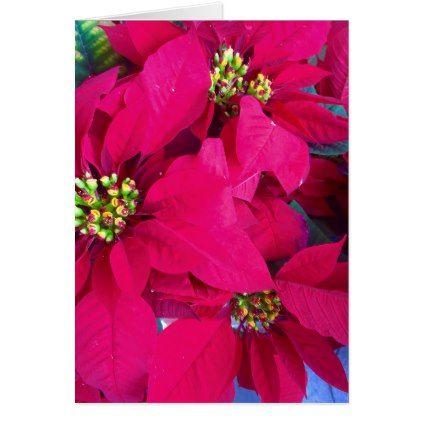 #Poinsettia greeting card - #Xmascards #ChristmasEve Christmas Eve #Christmas #merry #xmas #family #holy #kids #gifts #holidays #Santa #cards