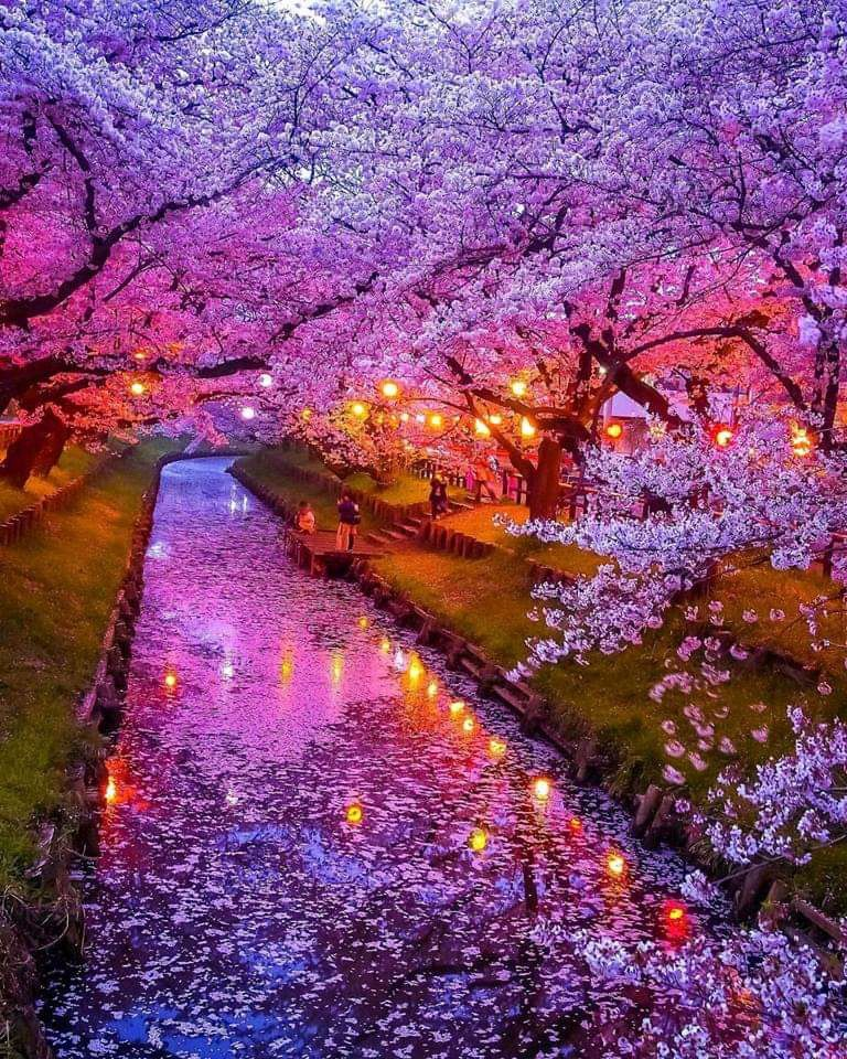 Cherry Blossom In Japan Cherry Blossom Japan Beautiful Landscapes Nature Photography