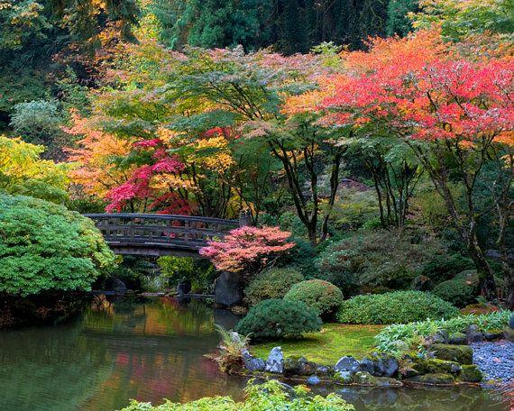 japanese garden photo autumn photograph fall colors autumn print red maple yellow bridge zen home nat20