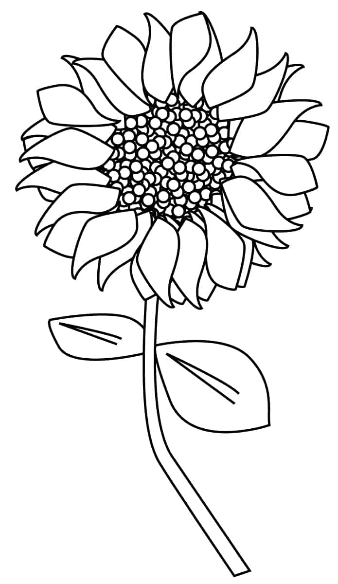 Sunflower Clipart Outline and more Sunflower coloring