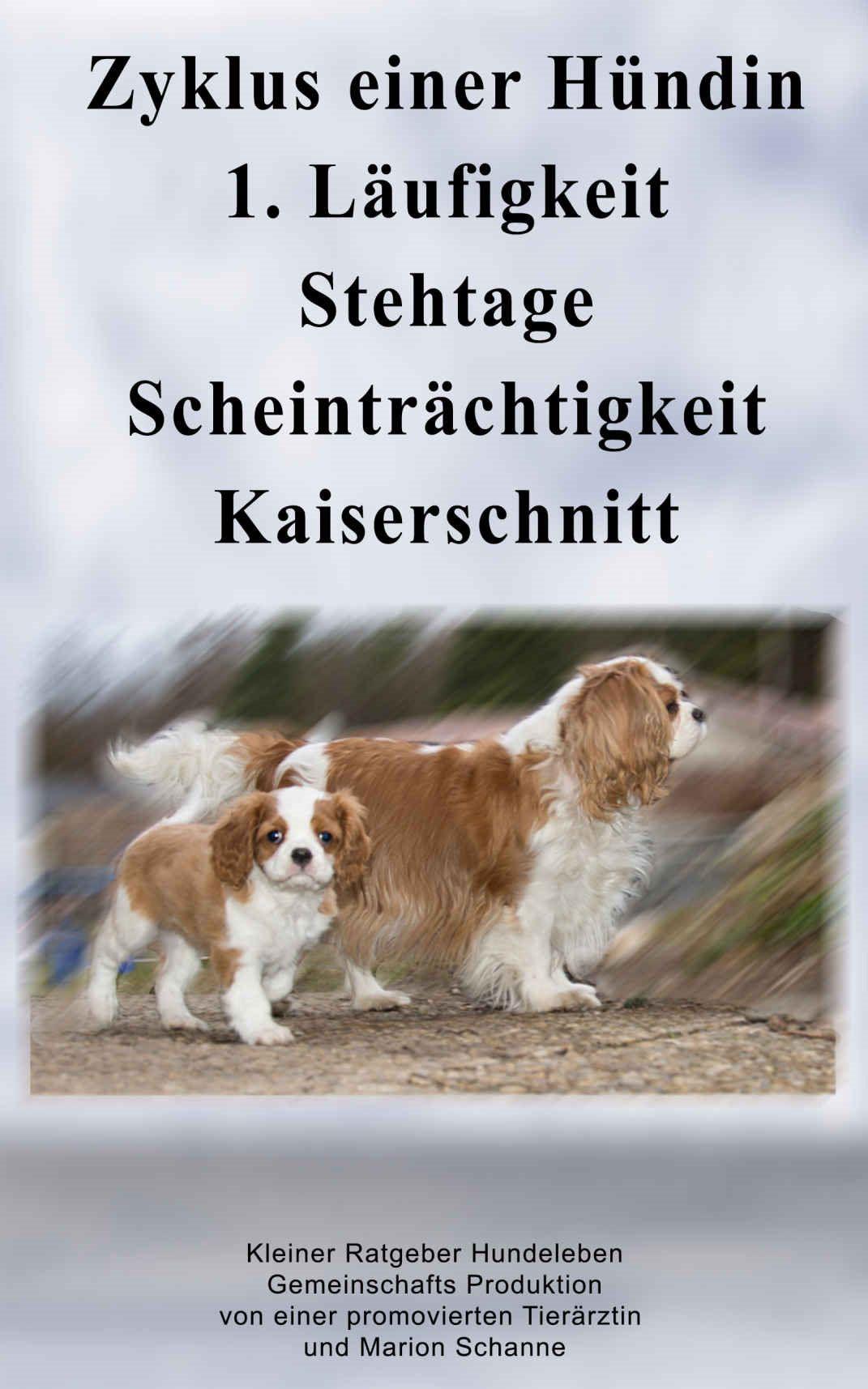 Wann Wird Eine Hundin Das Erste Mal Laufig Cavalier King Charles Spaniel Hunde King Charles Spaniel