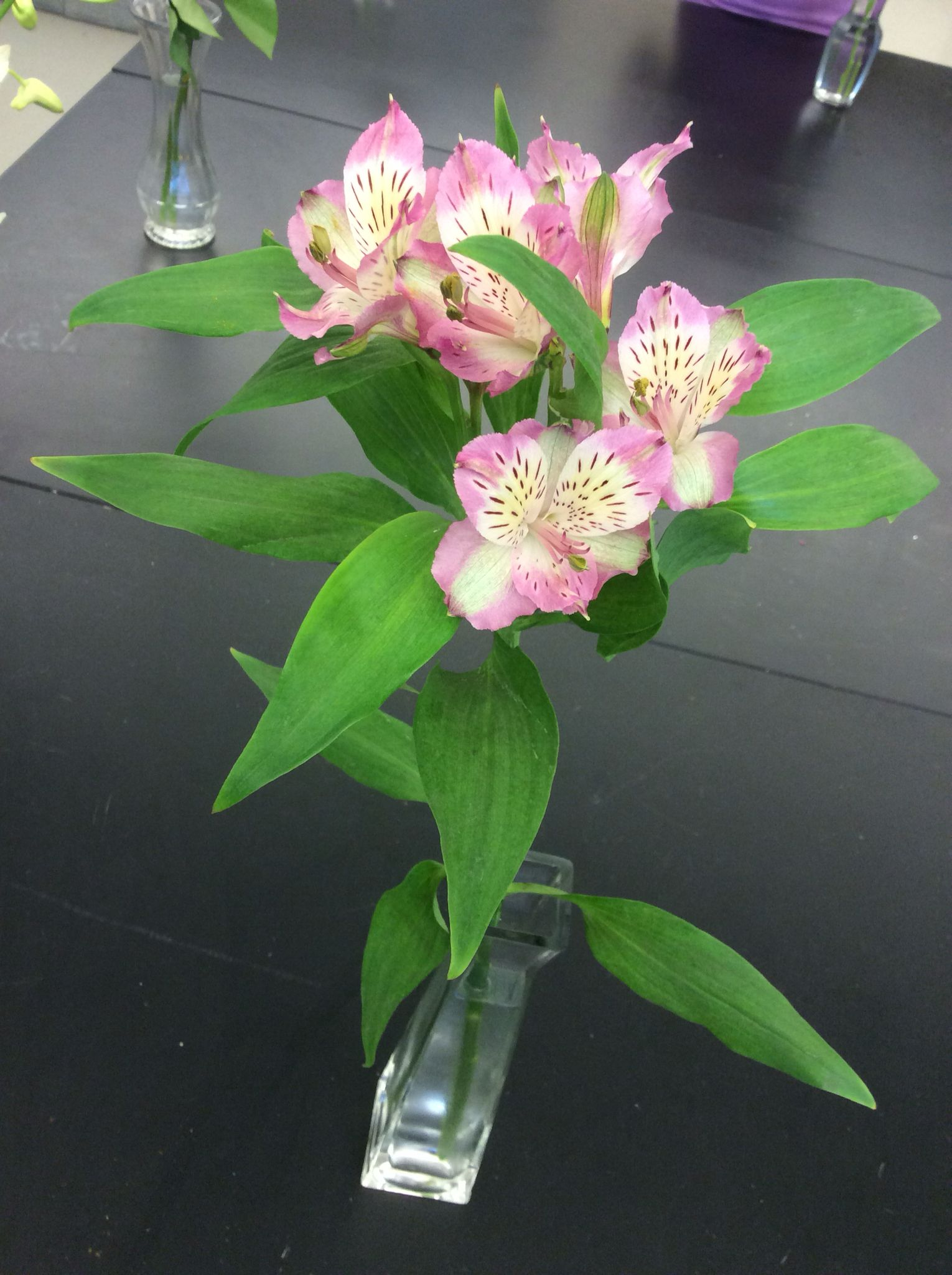 Common Name Alstroemeria Peruvian Lily Inca Lily Lily Of The Incas Scientific Name Alstroemeria Availability Year Round Peruvian Lilies Alstroemeria Umbel