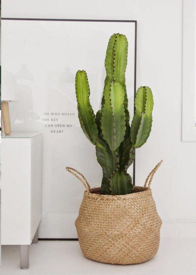6 Idees Deco Pour Sublimer Vos Plantes Autrement Decoration