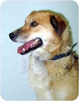 Wyoming Rowdy Is A Kind Gentle Shepherd Collie Mix Who Rowdy