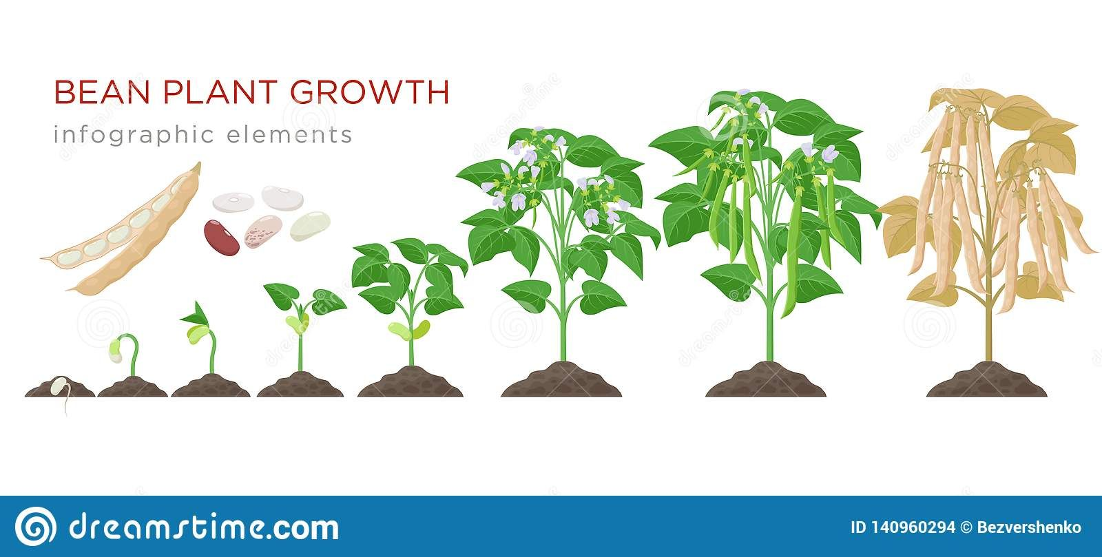 Plant Growth Image By Kat Deak On Harvestmoon Ac