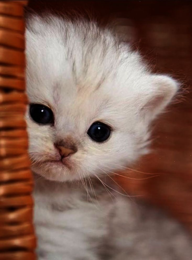Extremely Cute Kitten Click to see loads of great