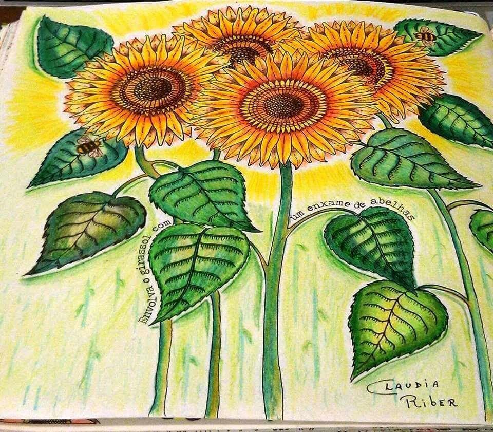 Sunflower Secret Garden Girassol Jardim Secreto Johanna Basford Adult ColoringColouringColoring BooksJohanna