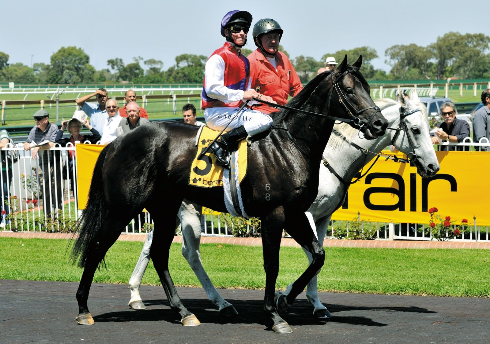 Thoroughbred horse, Quarter horse