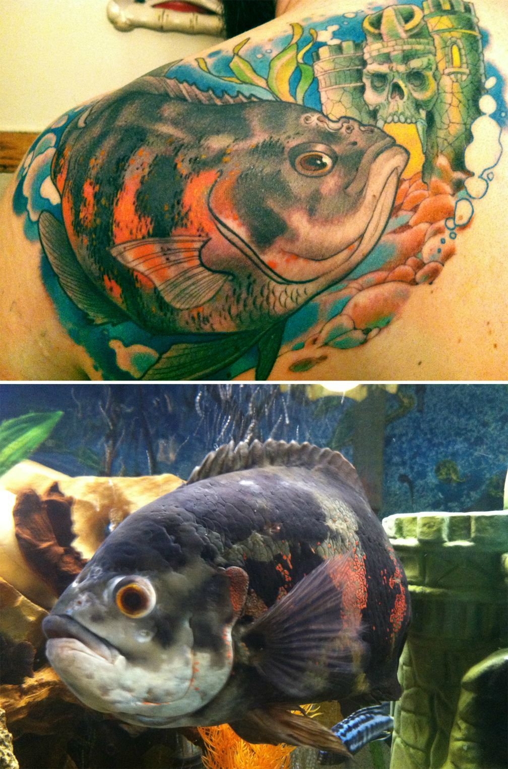 Rescued Oscar Cichlid Tattoo By Tim Biedron Fresh Ink Cichlids