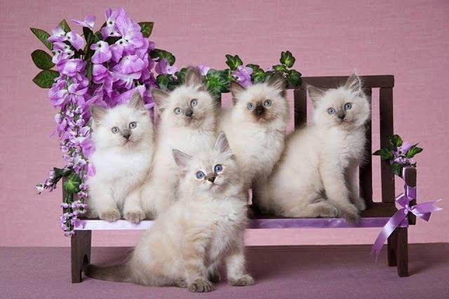 Életmód cikkek és képtár Cicák / Cats Állatok / Animals
