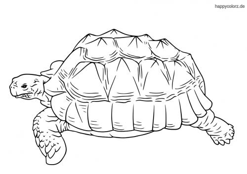 meeresschildkröte malvorlage  zootiere kleine