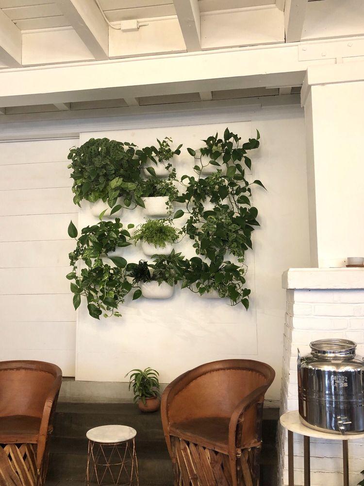 Plant wall Yelp Plant wall, Plants, Communal coffee