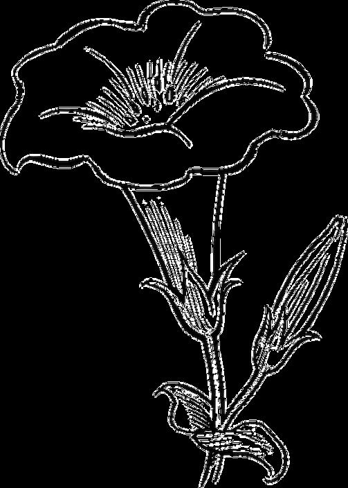 Gambar Bunga Kartun Hitam Putih Untuk Mewarnai