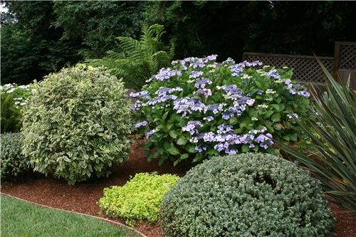 Low maintenance front yard landscaping front yard curb for Great bushes for landscaping