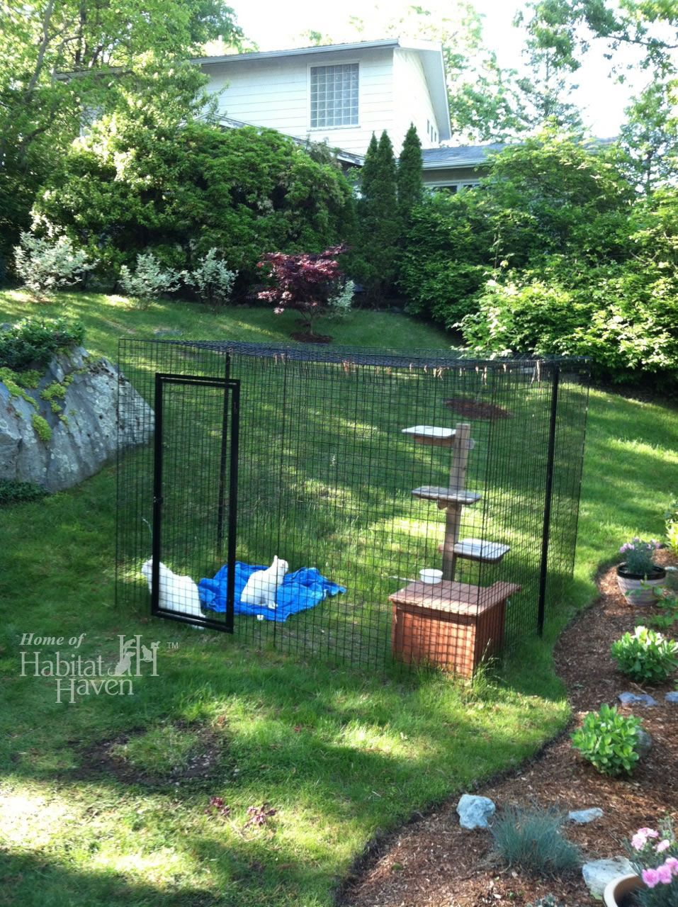 Garden trees names  Safe Friendly Cat and Dog Enclosures  Home of Habitat Haven  Cat