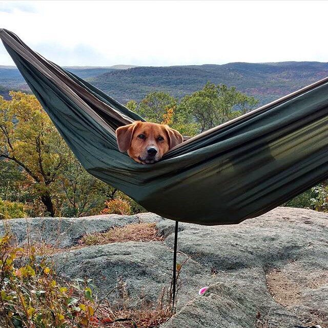 nothing beats hanging with your best friend  puppylove pc   dhollee  grandtrunking   nothing beats hanging with your best friend  puppylove pc      rh   it pinterest