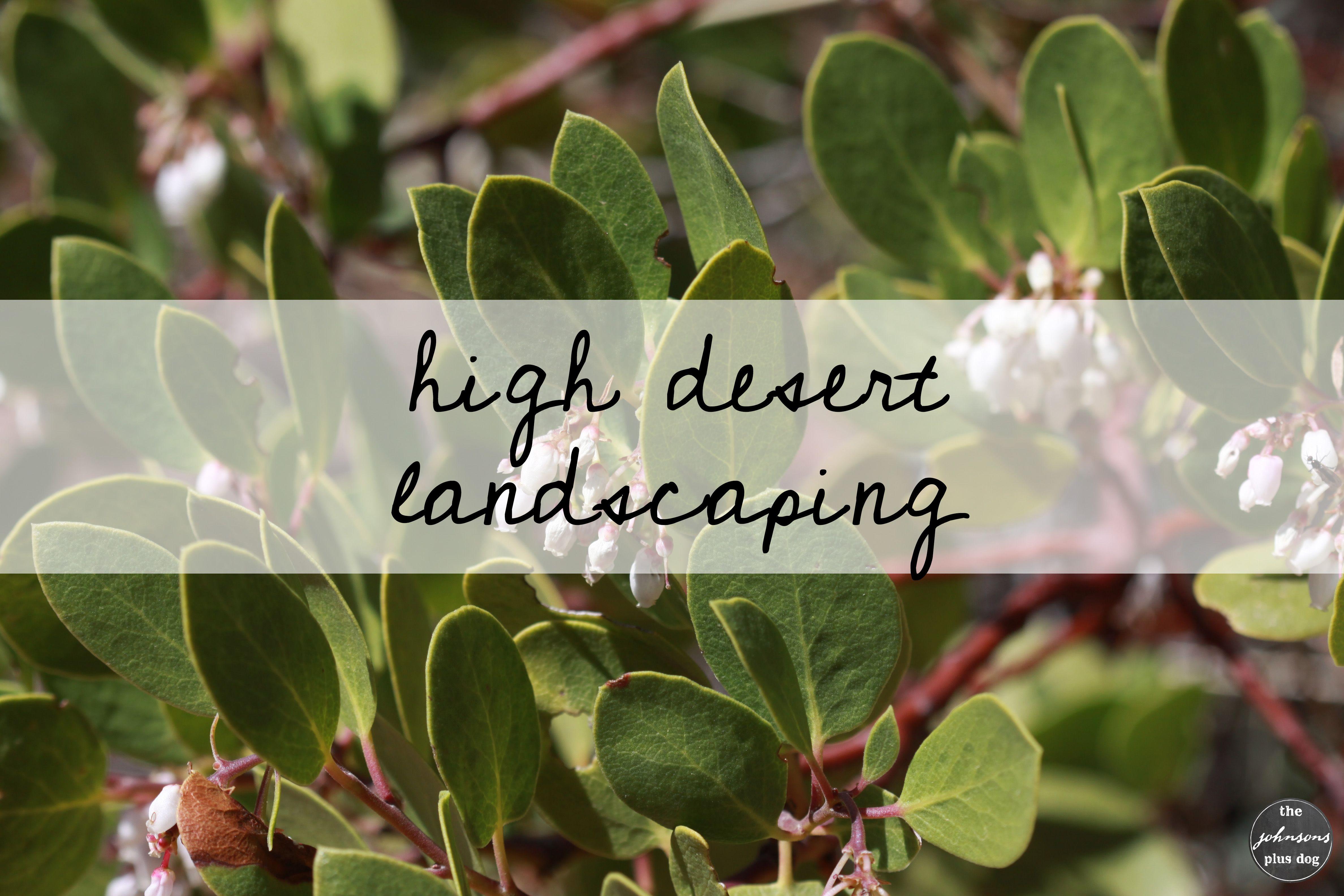 High Desert Landscaping Ideas High Desert Landscaping Desert Landscaping Oregon Garden