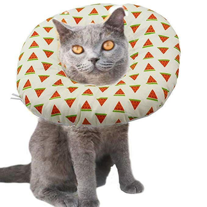 Pleasant Aniac Pet Adjustable Comfy Cone Soft Recovery Protective E Inzonedesignstudio Interior Chair Design Inzonedesignstudiocom