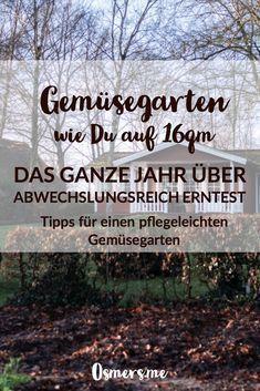 Photo of Anbauplan und Gartenkalender für das Gemüsebeet auf 16qm – Osmers Garten