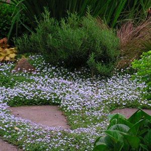 Best Flowers And Plants For Your Garden Plants Amazing Flowers Garden Inspiration