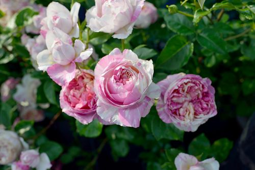 エドゥアール・マネ | Çiçekler | Pinterest