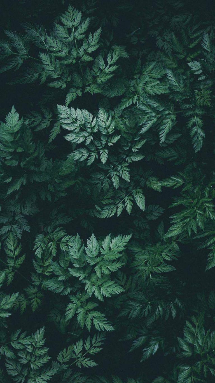 Nature Green IPhone Wallpaper - IPhone Wallpapers