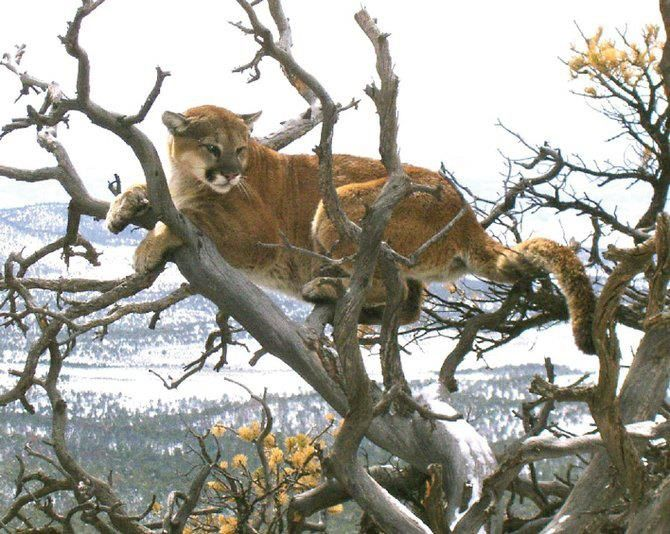 Cougars...Kitty's Got Claws! Join our Home Hunting Party