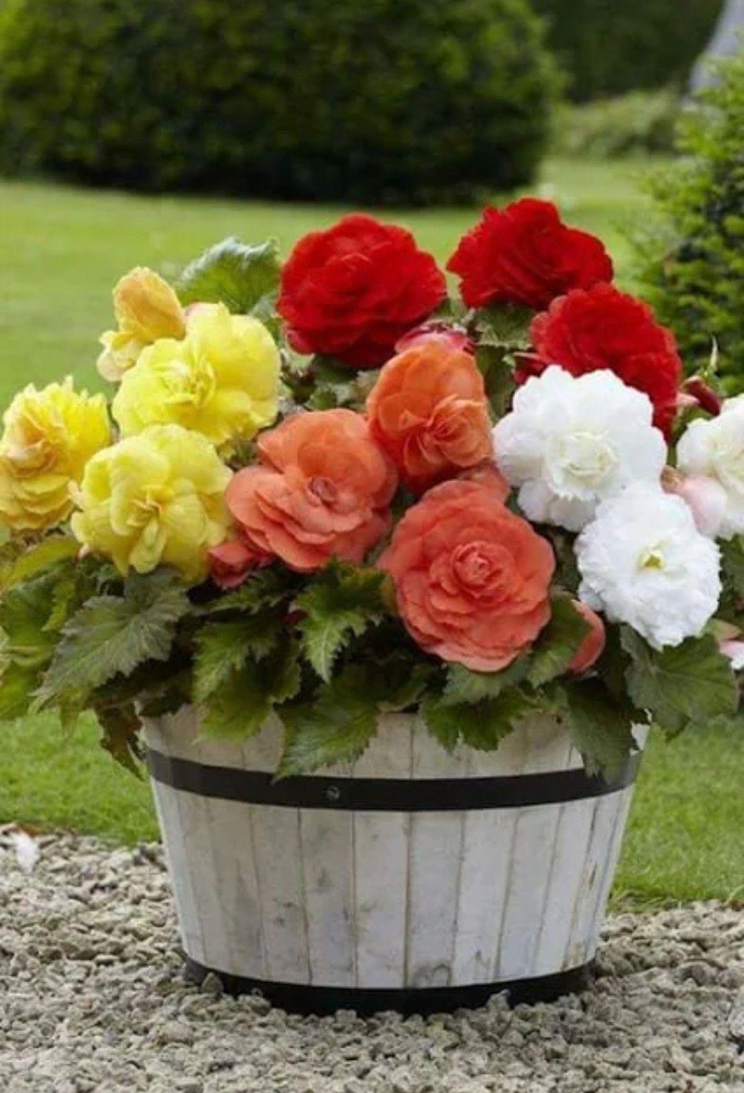 Pin By Jina Jina On Beautiful Flowers Pinterest Beautiful