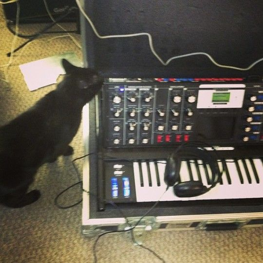 CatSynth pic: Moog Voyager