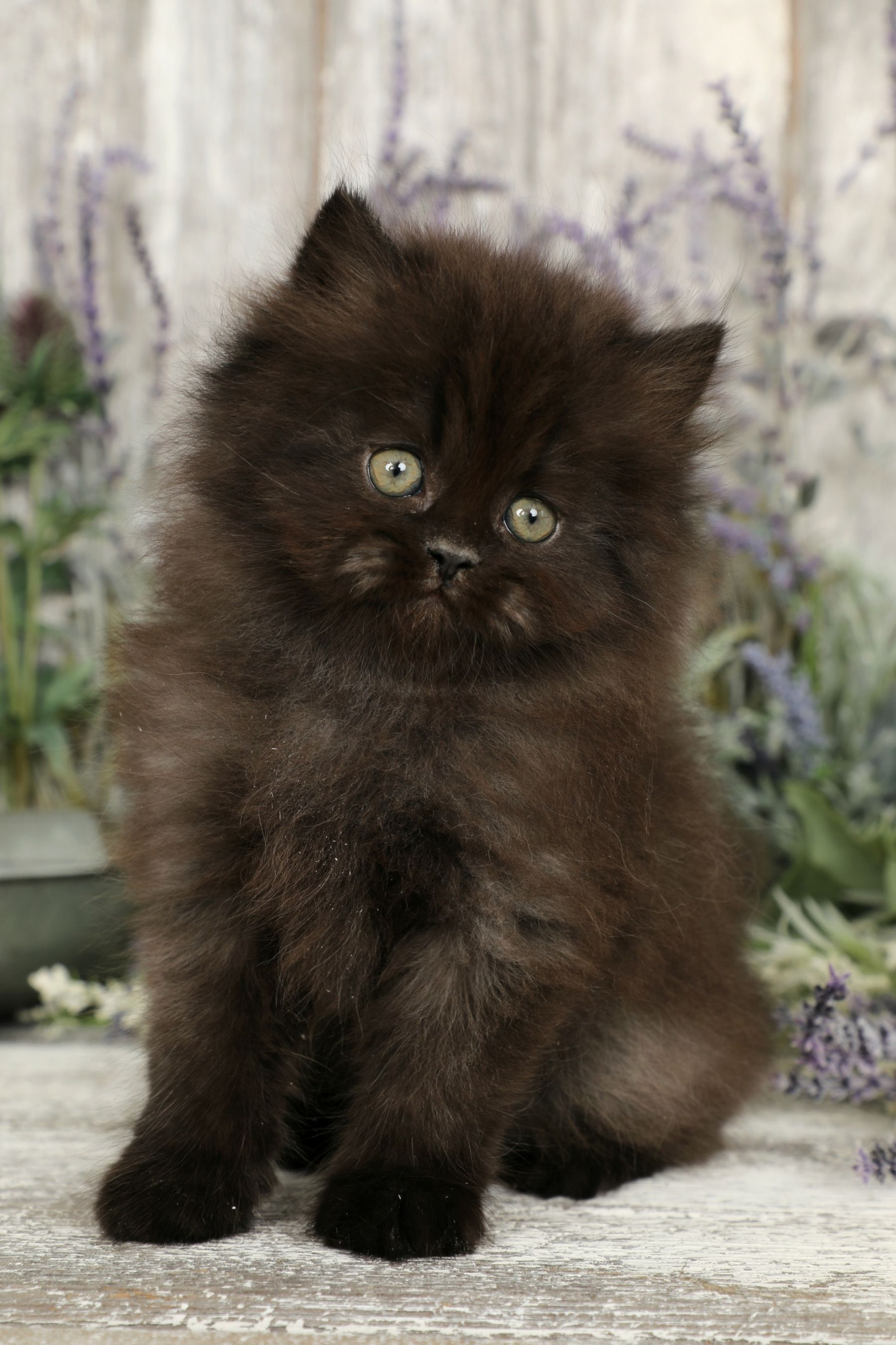 Cute Kittens On Sale Cute Cats And Kittens Doing Funny Things Blackcats Baby Cats Kittens Cutest Cute Cats And Kittens