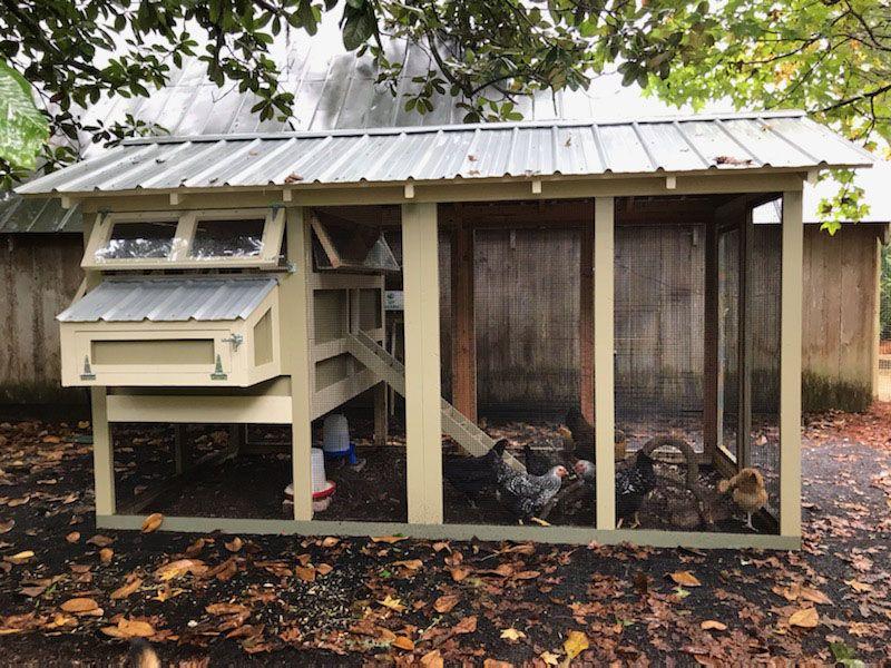 American Coop In 2020 Chickens Backyard Chicken Coop Building A Chicken Coop