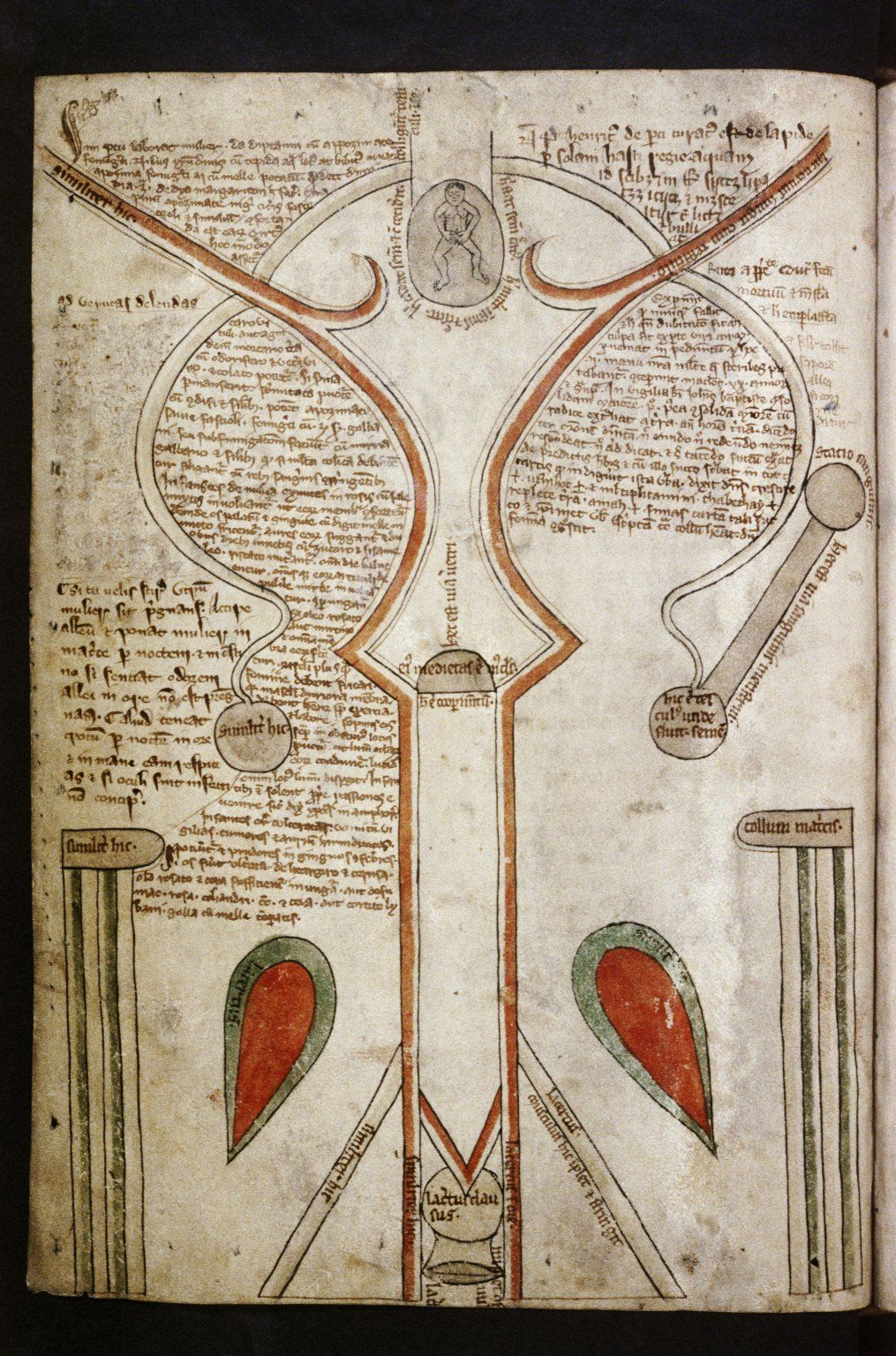 Drawings of the female genitalia from the Bodleian, MS. Ashmole 399, f. 153a and f. 013v. Treatise on the Human Body. England, c.1292.