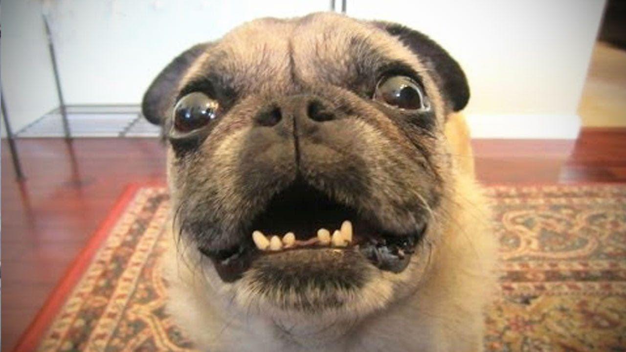 Funniest Dog Videos Ever 😂 [Epic Laughs] Dog barking