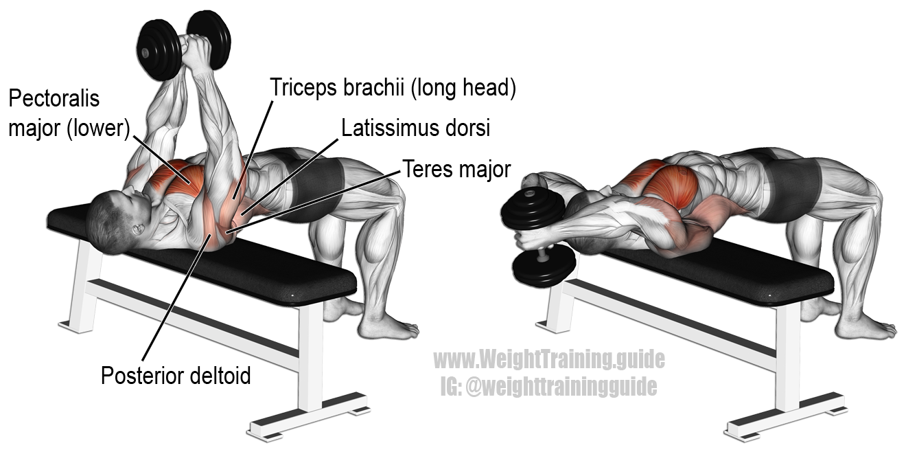 Dumbbell pullover. An isolation and push exercise. Target ...
